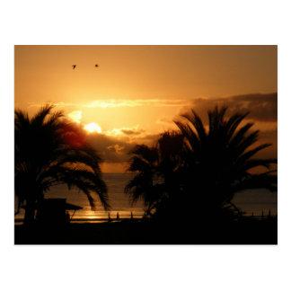 Carte Postale Lever de soleil tropical RIU des Îles Canaries