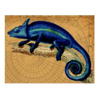 Carte Postale Lézard bleu