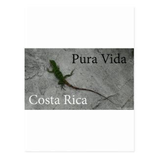 Carte Postale Lézard sur le mur Costa Rica Pura Vida