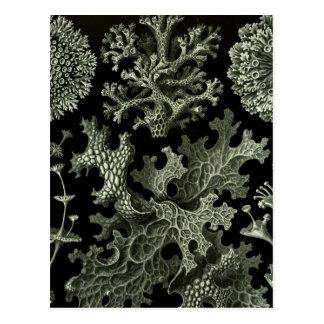 Carte Postale Lichen