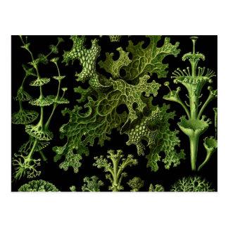 Carte Postale Lichens vert et noir