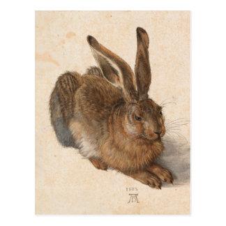 Carte Postale Lièvres | Albrecht Dürer
