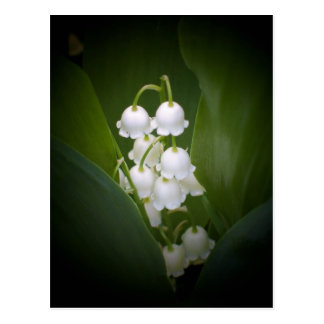 Carte Postale Lily-Of-The_Valley