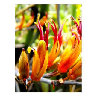 Carte Postale Lin fleurissant de la Nouvelle Zélande