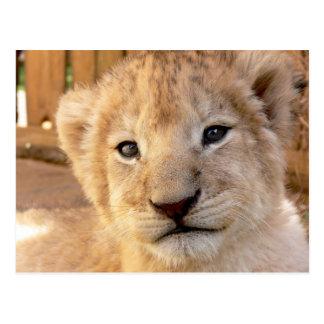 Carte Postale Lion CUB mignon