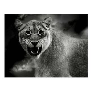 Carte Postale Lion fâché en noir et blanc