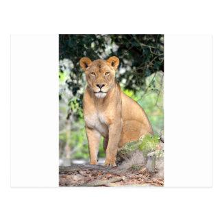 Carte Postale Lionne fière