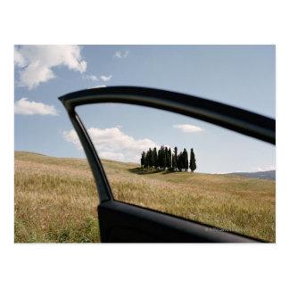 Carte Postale L'Italie, Toscane, d'Orcia de Val, arbres de