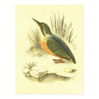 Carte Postale Lithographie vintage d'oiseau de martin-pêcheur