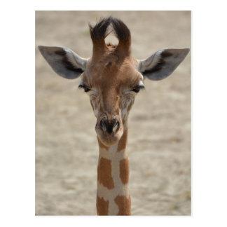 Carte Postale Little giraffe