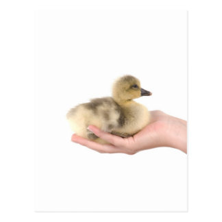 Carte Postale little goose in one hand