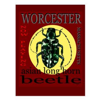 Carte Postale Long scarabée à cornes de Worcester