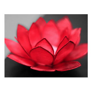Carte Postale Lotus rouge