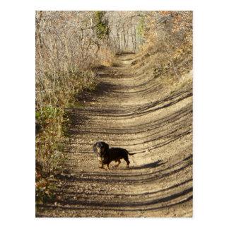 Carte Postale Louie le teckel marchant pendant l'automne