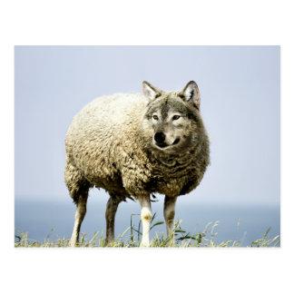 Carte Postale Loup dans l'habillement de moutons
