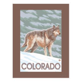 Carte Postale Loup gris StandingColorado