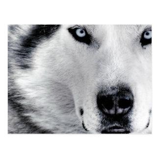 Carte Postale Loup observé par dièse