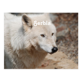 Carte Postale Loup serbe