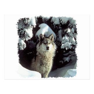 Carte Postale Loups de loup de neige