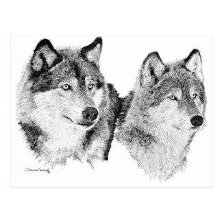 Carte Postale Loups solitaires
