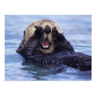 Carte Postale Loutre de mer mignonne | Alaska, Etats-Unis