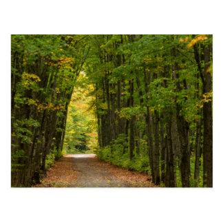 Carte Postale Lumière à l'extrémité d'un tunnel des arbres