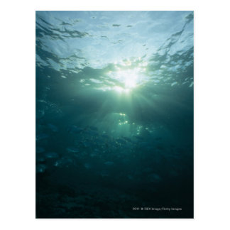 Carte Postale Lumière brillant sur le récif coralien et l'école