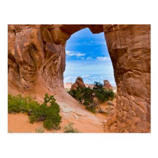 Carte Postale L'Utah, Etats-Unis. Voûte de pin en parc national
