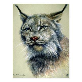 Carte Postale Lynx (étude principale)