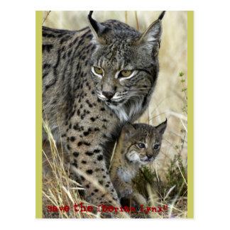 Carte Postale Lynx Ibérien - Iberian Lynx