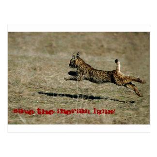 Carte Postale LYNX IBÉRIEN, Sait the Iberian Lynx !