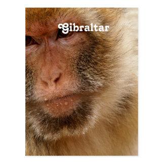 Carte Postale Macaques du Gibraltar Barbarie