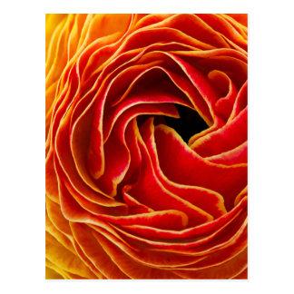 Carte Postale Macro gisements de fleur de la fleur | Carlsbad,
