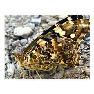 Carte Postale Madame peinte Butterfly