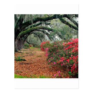 Carte Postale Magnolia Charleston de chênes d'azalées d'arbres