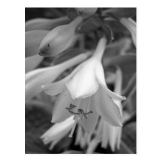 Carte Postale Maine_Black+White_154
