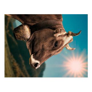 Carte postale majestueuse de vache