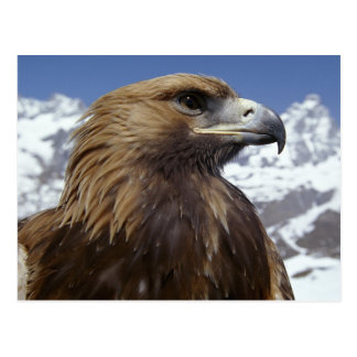 Carte postale majestueuse d'Eagle