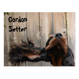 Carte postale maladroite de poseur de Gordon