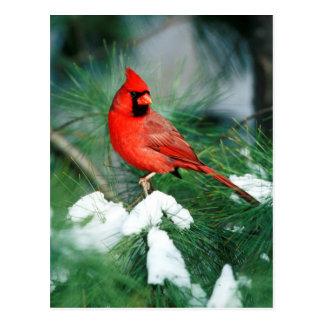 Carte Postale Mâle cardinal du nord sur l'arbre, IL