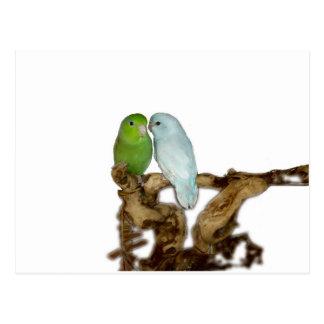 Carte Postale Mâle féminin et bleu vert de delute