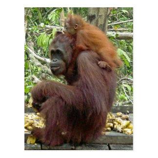 Carte Postale Maman et bébé d'orang-outan