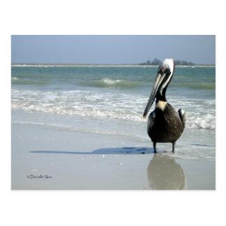Carte Postale Maman Pelican Postcard