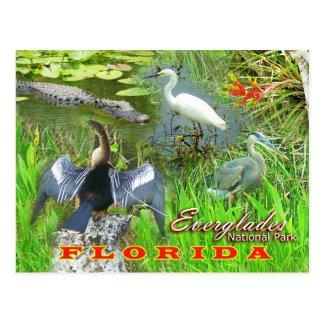 Carte Postale Marais parc national, la Floride