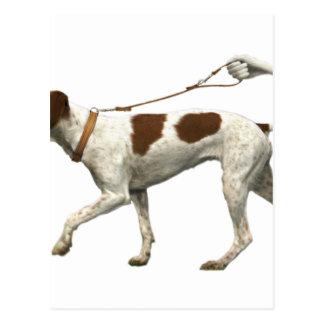 Carte Postale Marcheur de chien - queue de chien - saint Germain