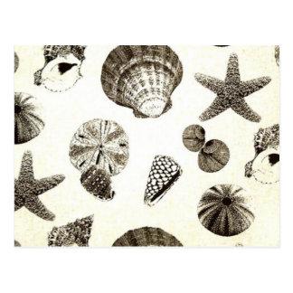 Carte Postale mariage tropical vintage de coquillage de plage