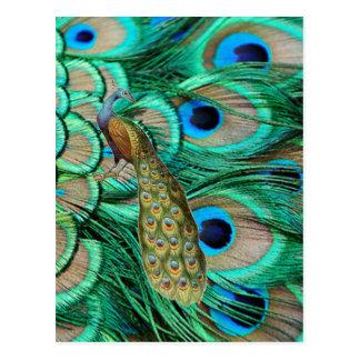 Carte Postale mariage turquoise de paon de turquoise vintage