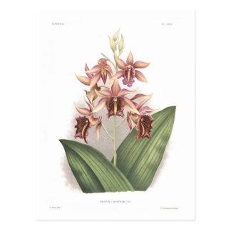 Carte Postale Marthae de Phaius