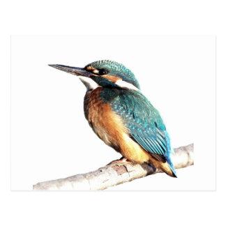 "Carte Postale ""Martin-pêcheur """