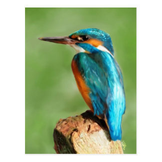 Carte Postale Martin-pêcheur